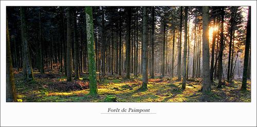 Bosque en Bretaña