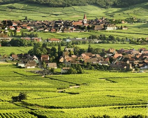 La ruta del Vino, en Alsacia