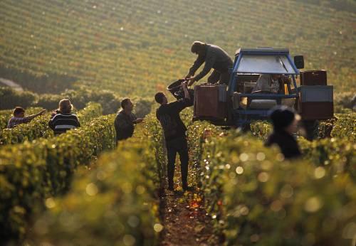 Visitando Dijon y los viñedos de la Cote de Nuits