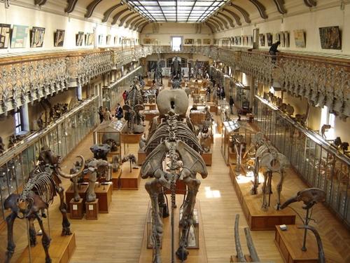 Museo de Historia Natural de Francia