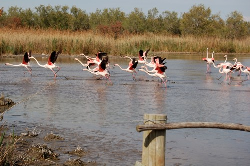 El Parque Ornitológico Pont de Gau, en la Camargue