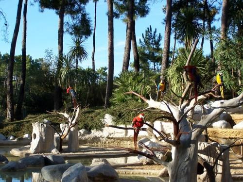 El encantador zoo de La Palmyre