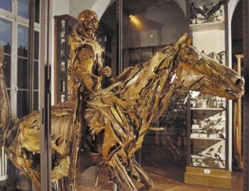 Museo Fragonard de Alfort y su colección de écorchés