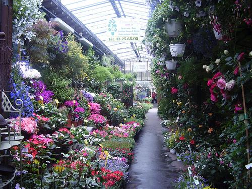 Mercados de flores Mercado-de-las-flores