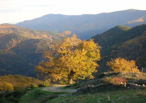 El Parque Nacional Cevennes