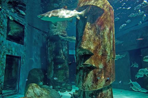 Sea Life, un aquarium lleno de vida